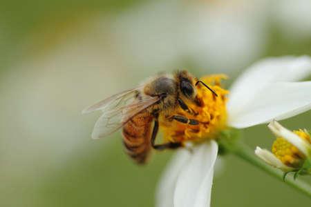 bee garden: ABEJA Foto de archivo