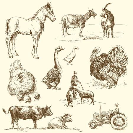 turkey hen: Granja - dibujado a mano la colecci�n Vectores