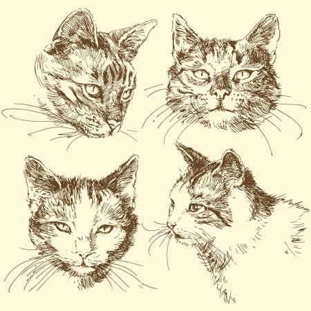 furry animals: gatito, gato - dibujado a mano set