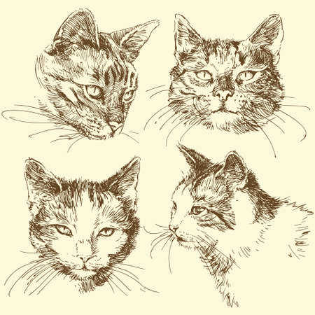 brown pussy: kitten, cat - hand drawn set