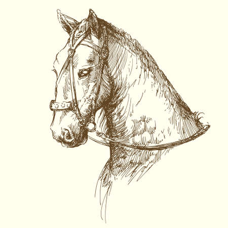 horse drawn: horse