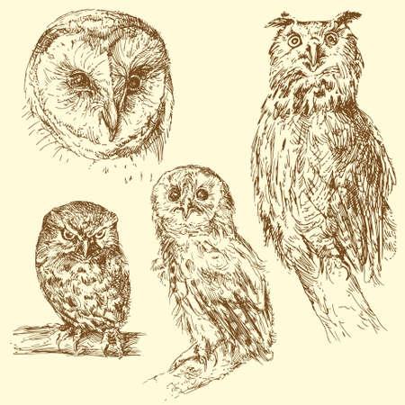 sowa: sowy Ilustracja