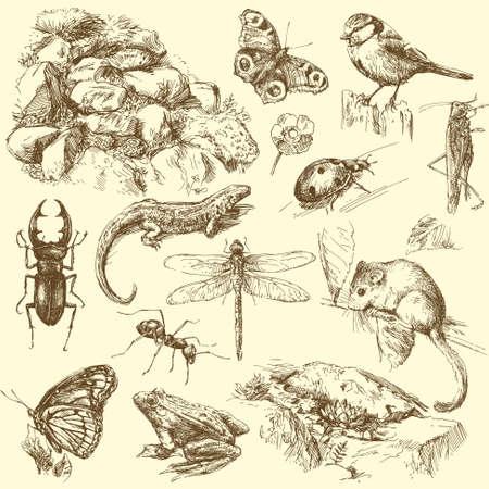 käfer: Garten Tiere Illustration
