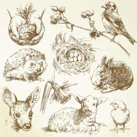 hedgehog: spring collection Illustration