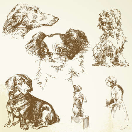 greyhound: dogs