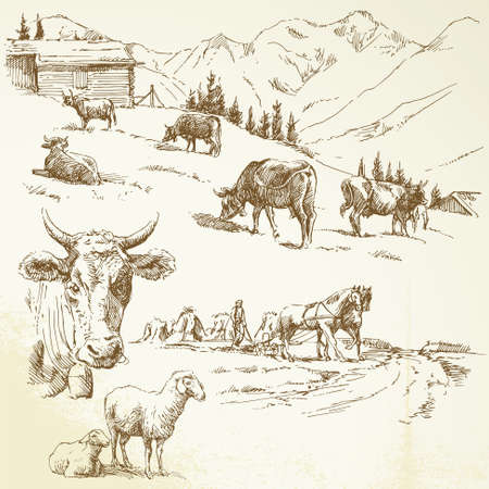 cows: farm Illustration