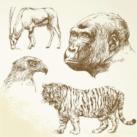 wildlife conservation: wild animals