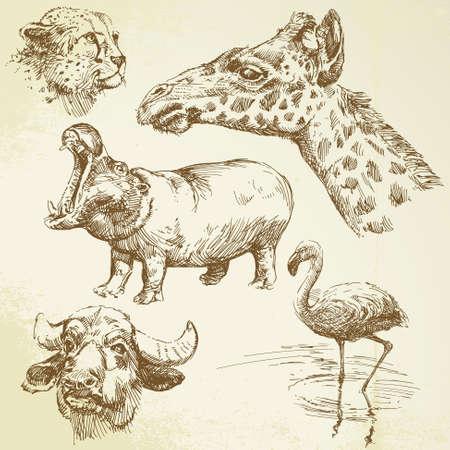 hippo cartoon: wild animals - hand drawn set