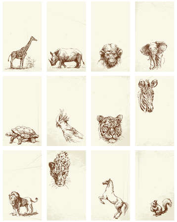 business card - wild animals Stock Vector - 13464326