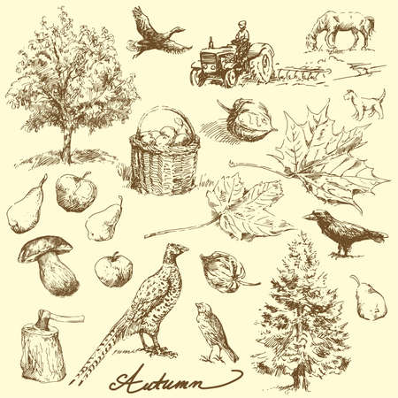 pear tree: autumn-hand drawn set