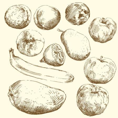 fruit-hand drawn set  Vector