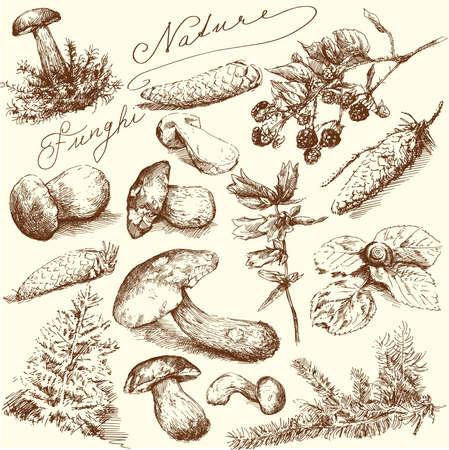 Natur-Hand gezeichnete Sammlung