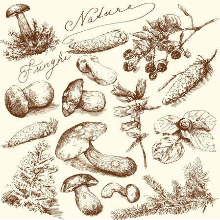 boletus: nature-hand drawn collection  Illustration
