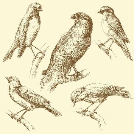 duif tekening: vogelstand Stock Illustratie
