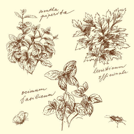herbal-hand made drawing  Vector