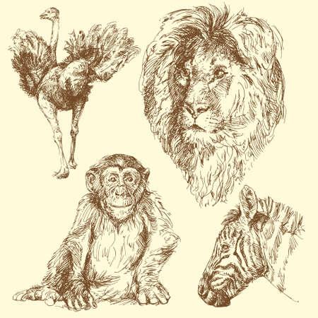 avestruz: los animales salvajes Vectores