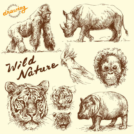 hippopotamus: dibujado a mano colecci�n de animales Vectores