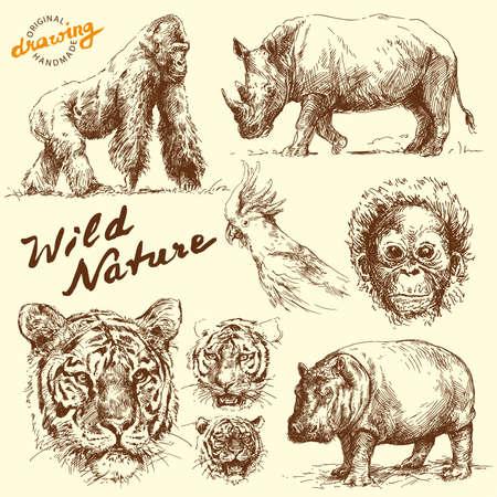 nashorn: Hand gezeichneten Tiere Kollektion