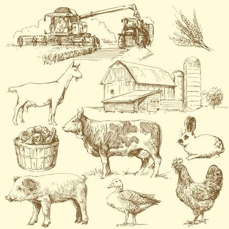 combine harvester: farm animals