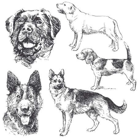- recogida de perros dibujados a mano Ilustración de vector