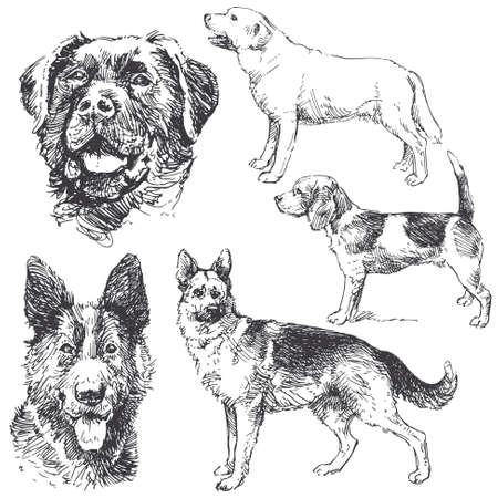 dogs - hand drawn collection Vector Illustration