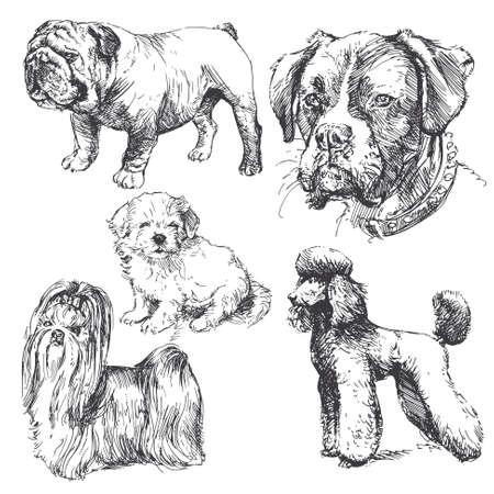 - recogida de perros dibujados a mano