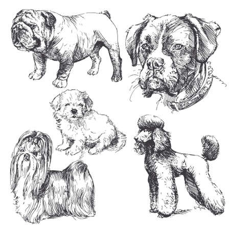 dogs - hand drawn collection Vector