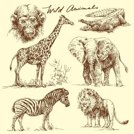elefantes: los animales salvajes Vectores