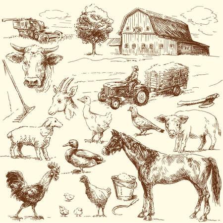 cerdo caricatura: dibujado mano original colección de la granja