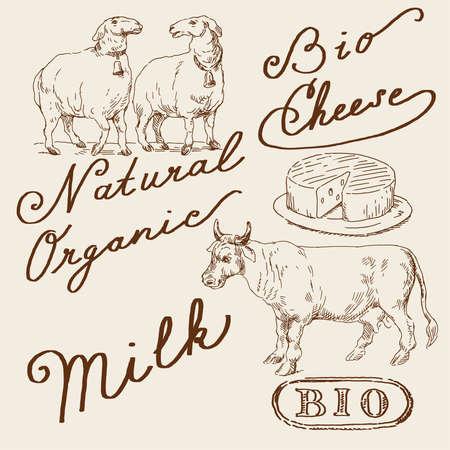 milk cheese: natural set  Illustration