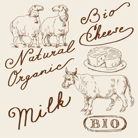 lamb: set naturale Vettoriali