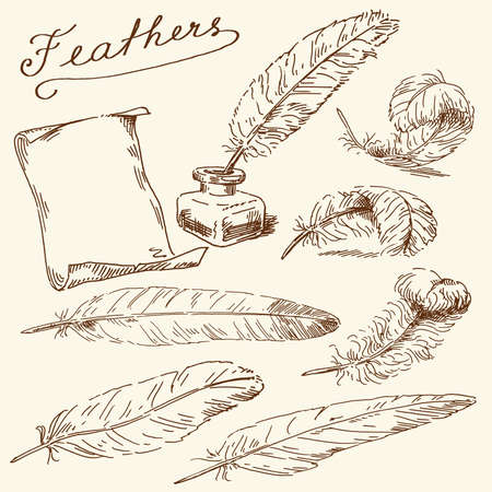 feather quill: hand drawn feathers Illustration