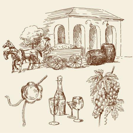 caballo bebe: Por el vino elaborado la colección Vectores