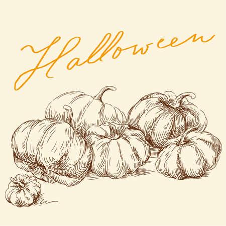 autumn vegetables: hand drawn pumpkins