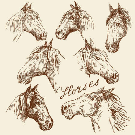 hand drawn horses collection  Vector
