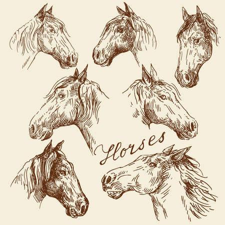 garanhão: m�o cole��o desenhada cavalos