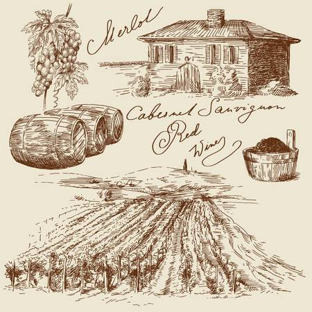 wine label: hand drawn vineyards