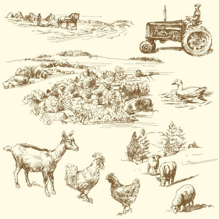 natural cock: original hand drawn farm collection