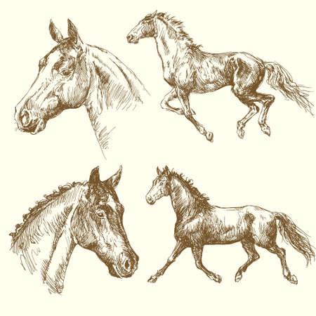 oeste: caballos dibujados a mano