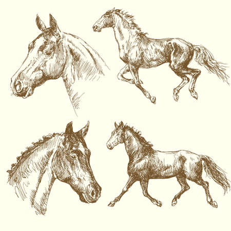 horse running: hand drawn horses Illustration