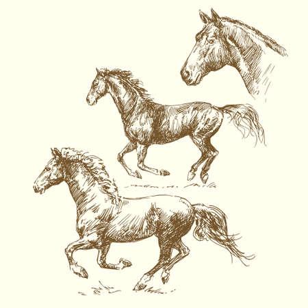 horse drawn: hand drawn horses  Illustration