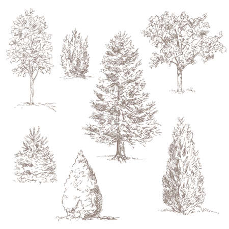 cypress tree: hand drawn trees isolated on white