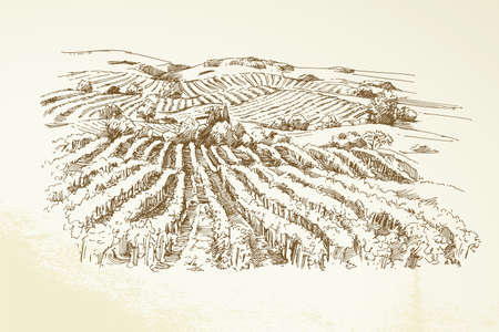 winery: Vineyard Landscape  - hand drawn illustration Illustration