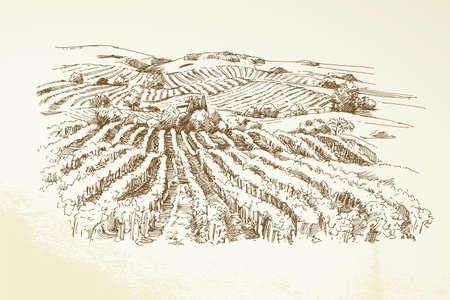 Vineyard Landscape - mano, disegnato, illustrazione