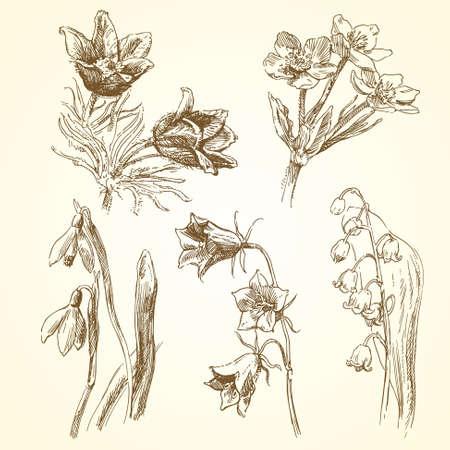 식물상: 꽃 - 손으로 그린 컬렉션 일러스트
