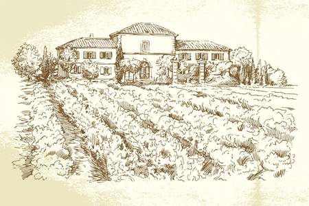 wine label: Vineyard - hand drawn illustration  Illustration
