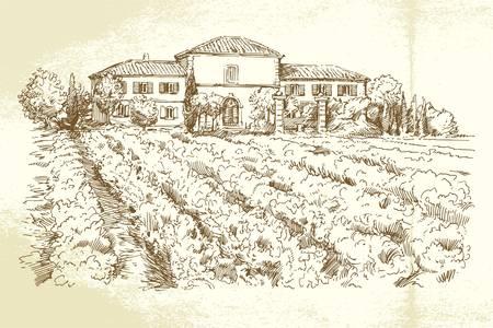 Vineyard - Hand gezeichnete Illustration