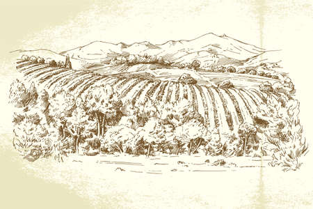 italy landscape: Vineyard France - hand drawn illustration