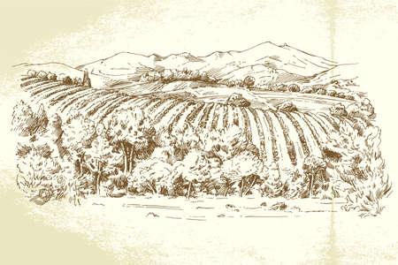 Vineyard France - hand getrokken illustratie