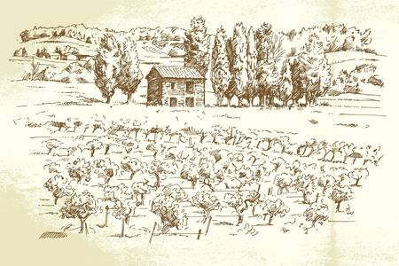 harvesting: landscape, vineyard - hand drawn illustration